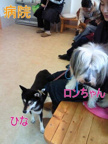 NEC_0345ろんちゃん