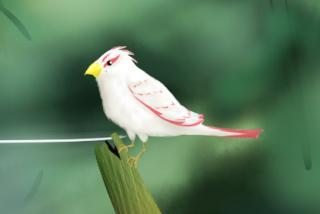 架空の鳥さん