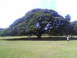 きになる木~