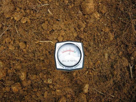 H21.2.28耕作放棄地開墾 009ph6.0