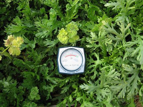 H21.2.28野菜5春菊 021ph5.5