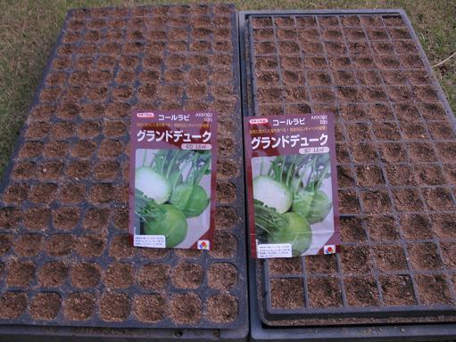 H21.9.6 コールラビ種蒔き@005