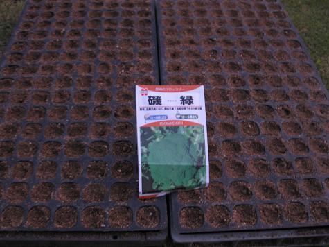H21.9.6 ブロッコリー種蒔き @008