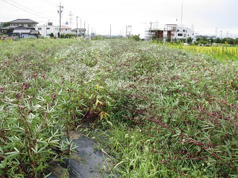 H21.10.8 台風18号被害状況 ローゼル@005