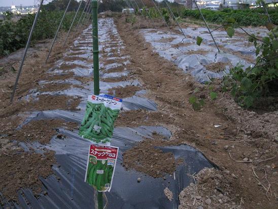 H21.11.29   エンドウ種蒔き @ 006