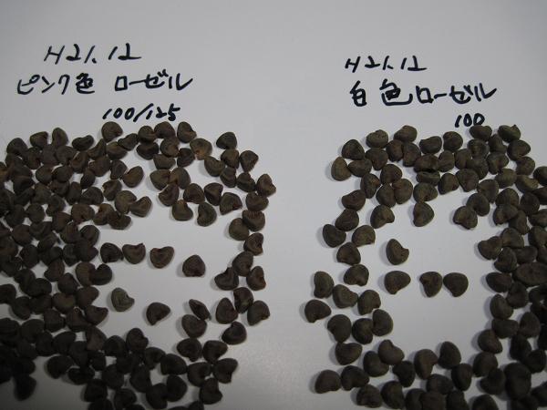 H21.12.31  ローゼル種子の比較 @005