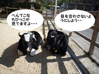 maika04022.jpg