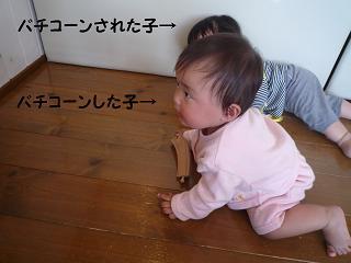 maika04094.jpg