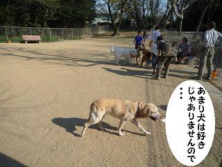 maika04104.jpg