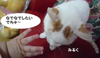 maika10061.jpg
