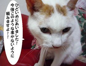 maika10065.jpg