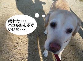 maika11103.jpg