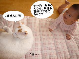 maika11141.jpg