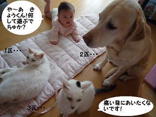 maika11143.jpg