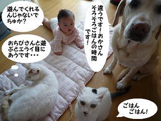 maika11144.jpg