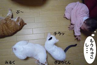 maika12181.jpg
