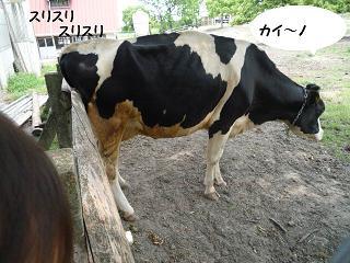 maika2105266.jpg