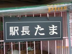 07_3_29nekoekityou1.jpg