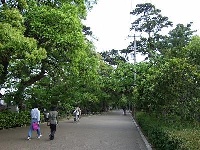 夙川さくら道その1