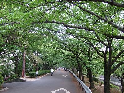 夙川さくら道その2