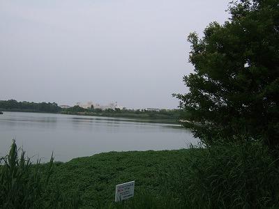 昆陽池その2