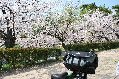 夙川桜その4