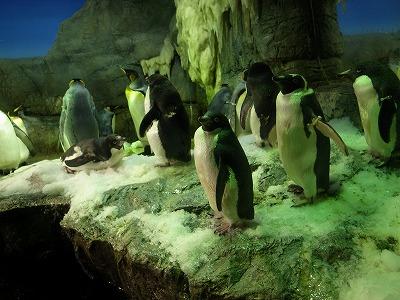 海遊館ペンギン
