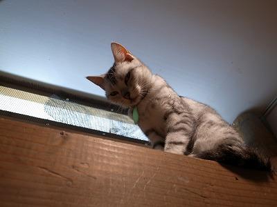 天保山アニパ 猫
