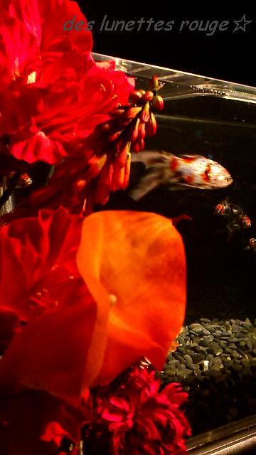 お花と金魚