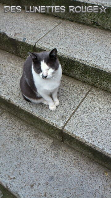 江の島ネコ