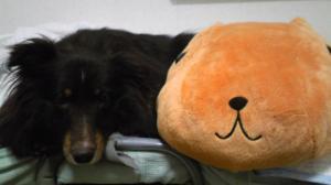 カピパラ&愛犬