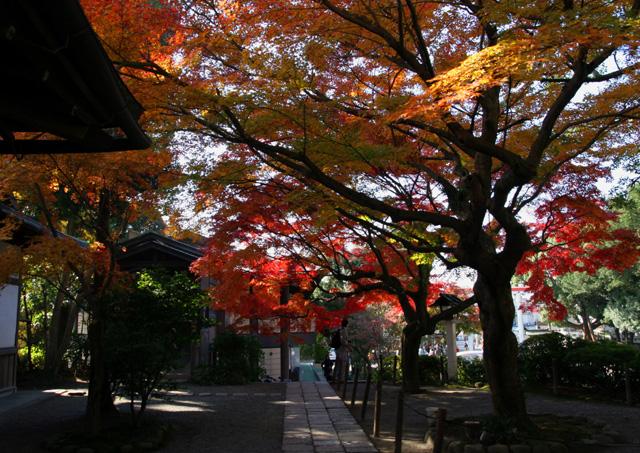 Let's 鎌倉4