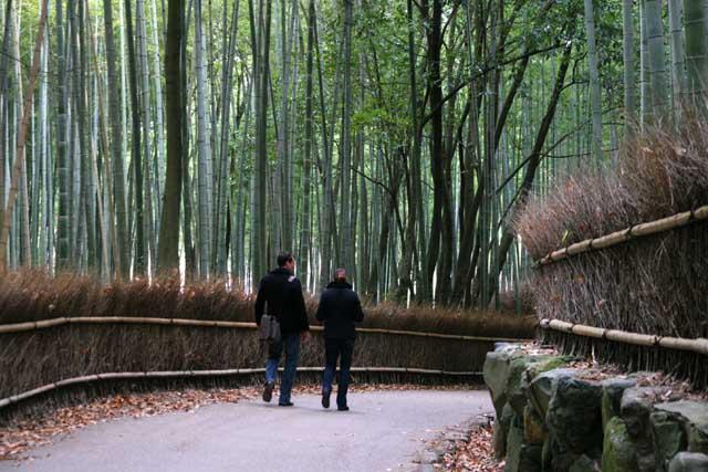 嵯峨野の竹林6