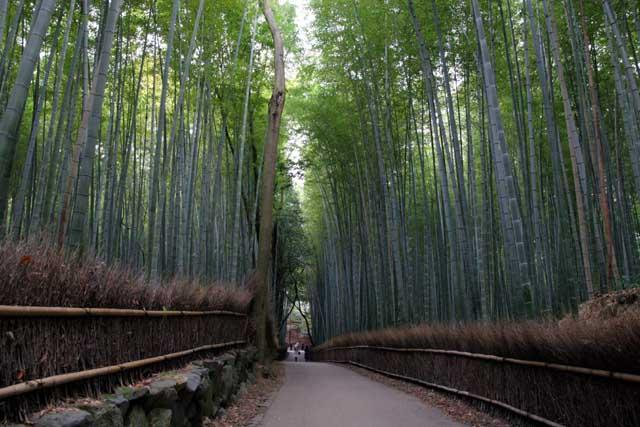 嵯峨野の竹林7