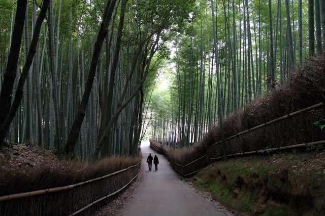 嵯峨野の竹林2