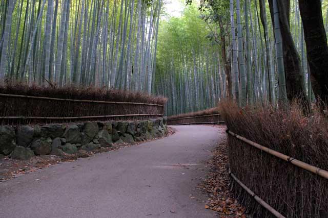 嵯峨野の竹林8