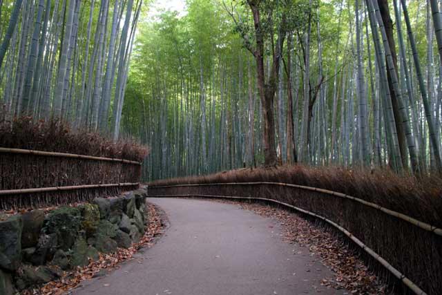 嵯峨野の竹林3