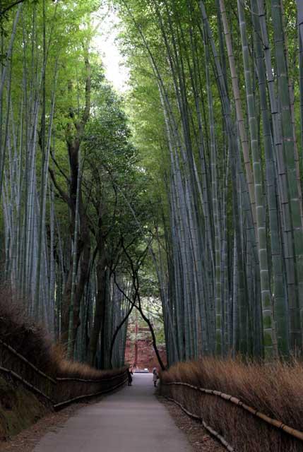 嵯峨野の竹林9