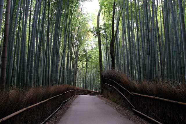 嵯峨野の竹林10