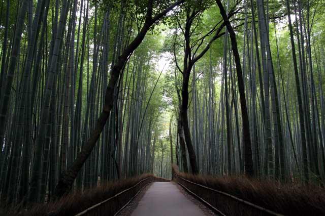 嵯峨野の竹林4