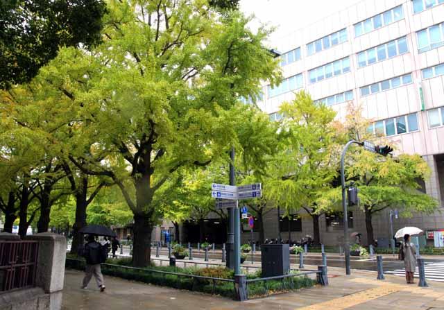 yokohamauouku17