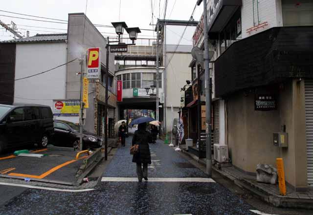 yokohamauouku25