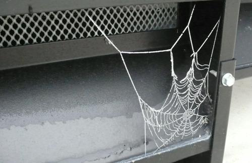 蜘蛛の巣が・・・