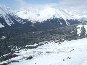 スキー場の周りは森