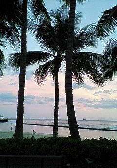 椰子の木 2