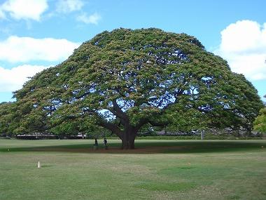 この木なんの木1