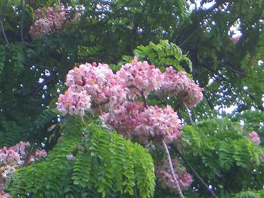 ハワイの花1