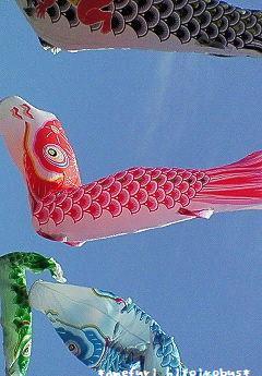 鯉のぼり 2
