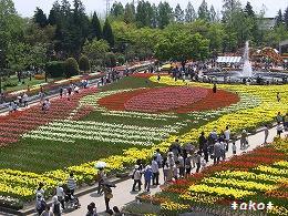 20070518-3タワー赤い花