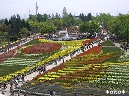 20070518-4タワー白い花